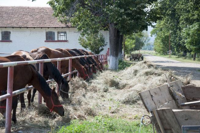 Pferdezucht in Cislau